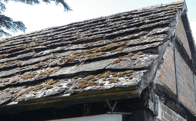Moss on traditional slate roof